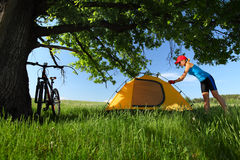 Hiker. Young sporty lady setting up a tent in a meadow under big oak's brunch Stock Photography