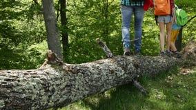 Hikers идя на упаденное имя пользователя дерева лес сток-видео