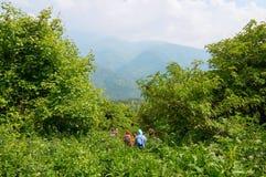 Hikers идя через высокую траву в армянских горах стоковые фотографии rf