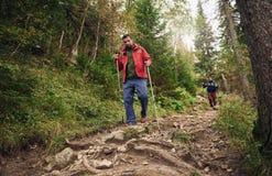 Hikers идя вниз с следа в лесе Стоковое фото RF