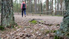 Hikers идя на путь похода в лесе outdoors акции видеоматериалы