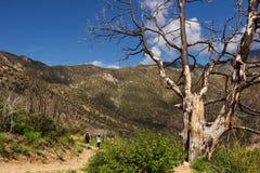 Hikers на горной тропе Стоковое Изображение