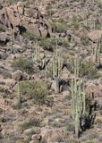 Hikers на пешей тропе пустыни в северном Scottsdale, Аризоне стоковое фото rf