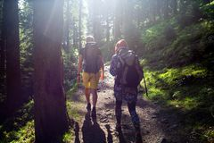 Hikers на следе в древесине Стоковые Фотографии RF