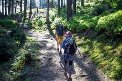 Hikers на следе в древесине Стоковое Изображение
