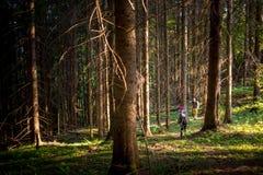 Hikers на следе в древесине Стоковые Фото