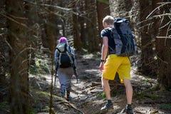 Hikers на следе в древесине Стоковая Фотография