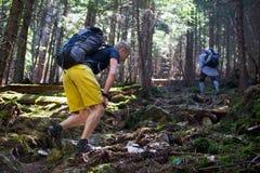 Hikers на следе в древесине Стоковые Изображения RF