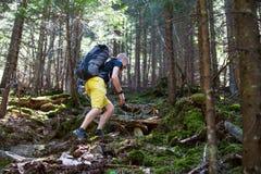 Hikers на следе в древесине Стоковое Изображение RF