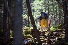 Hikers на следе в древесине Стоковые Изображения