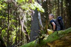 Hikers на следе в древесине Стоковая Фотография RF