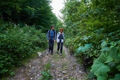 Hikers на следе Стоковое Фото