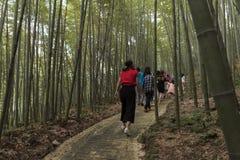 Hikers на следе через бамбуковый лес Стоковые Фото