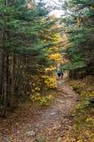Hikers на узком скалистом пути через лес Стоковые Фотографии RF