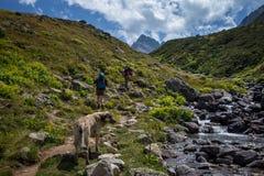 hikers при большие рюкзаки на горе Kackarlar стоковая фотография rf