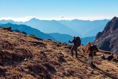 Hikers с рюкзаками идя на травянистую пятку в горах Стоковые Фотографии RF