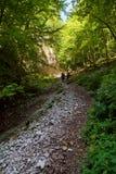 Hikers с рюкзаками на следе Стоковые Фото
