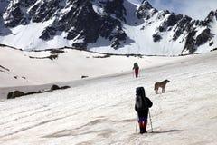 2 hikers с собакой на горах весны снежных в дне солнца Стоковые Изображения RF