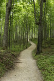 Hikers along forest path - Pictured Rocks National Lakeshore Stock Photography