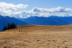 Hikers along the Hurricane Hill trail. Olympic National Park Stock Photo