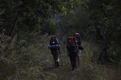 Hikers Ascending Up A Forest Path In The `Wolkberg` Mountain Range, Limpopo, South Africa. A Group of three backpacking hikers ascend up A forest path in the ` stock image