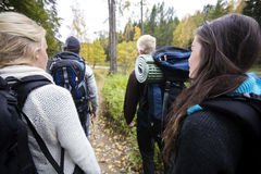 Hikers With Backpacks Walking On Forest Trail. Rear view of young male and female hikers with backpacks walking on forest trail Royalty Free Stock Image