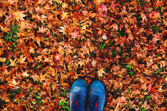 Hikers boots on the autumn leaves. royalty free stock photography