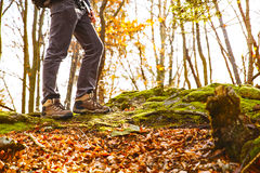 Hikers boots on forest trail. Autumn hiking. royalty free stock photography