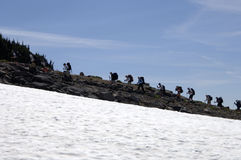 Hikers climbing Mt. Rainer Stock Image