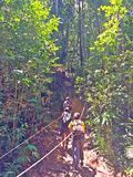 Hikers climbing upslope in rainforest Stock Images