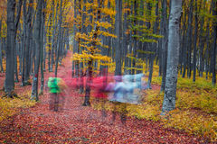Hikers crossing the forest in autumn.Autumn in the forest with l Stock Images