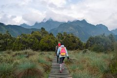 Hikers in the dense rainforest of Rwenzori Mountains, Uganda stock photography