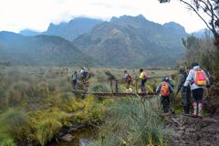 Hikers in the dense rainforest of Rwenzori Mountains, Uganda stock images