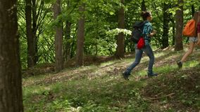 Hikers enjoy walking in forest among trees. Hikers enjoy walking in forest - woman and teenagers walking uphill among trees stock video footage