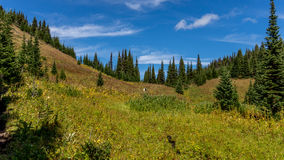 Hikers following a trail through the alpine meadows Stock Images