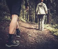 Hikers in a forest Royalty Free Stock Photo