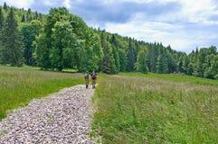 Hikers в forrest Стоковая Фотография