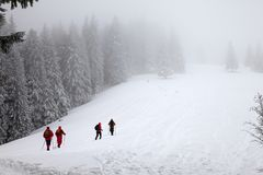 Hikers go up on snowy slope in snow-covered spruce forest at haze. Winter day after snowfall. Carpathian Mountains, Ukraine. Remote location stock images