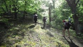 Hikers group trekking in Crimea stock video