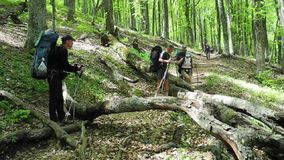 Hikers group trekking in Crimea stock footage