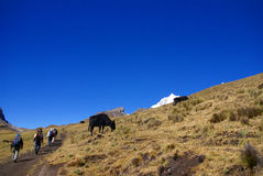 Hikers in high Andes Royalty Free Stock Photo