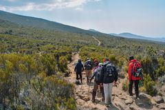 Hikers at Mount Kilimanjaro, Tanzania. A group of hikers at the high altitude moorland of Mount Kilimanjaro, Tanzania royalty free stock photo