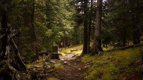 Hikers on a Mountain Trail in the Woods. Hikers descend the Willow Creek Trail in a Colorado forest at evening Royalty Free Stock Photo