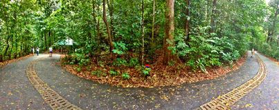 Bukit Timah Nature Reserve, Singapore. Panoramic view of the main road through the primary rainforest in Bukit Timah nature reserve, Singapore Stock Image