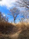 Hikers Path in the San Pedro Riparian National Conservation Area Royalty Free Stock Image