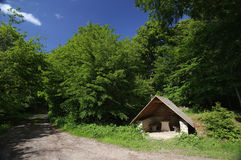 Hikers Refuge In A Beech Forest Stock Images