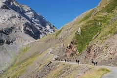 Hikers on the road along mountain Col de Tentes. Stock Photos