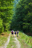 Hikers on the road entering in a mountain forest Royalty Free Stock Photos