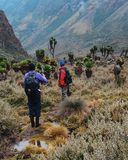 Hikers in the Rwenzori Mountains royalty free stock image
