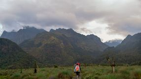Hikers in Rwenzori Mountains stock images
